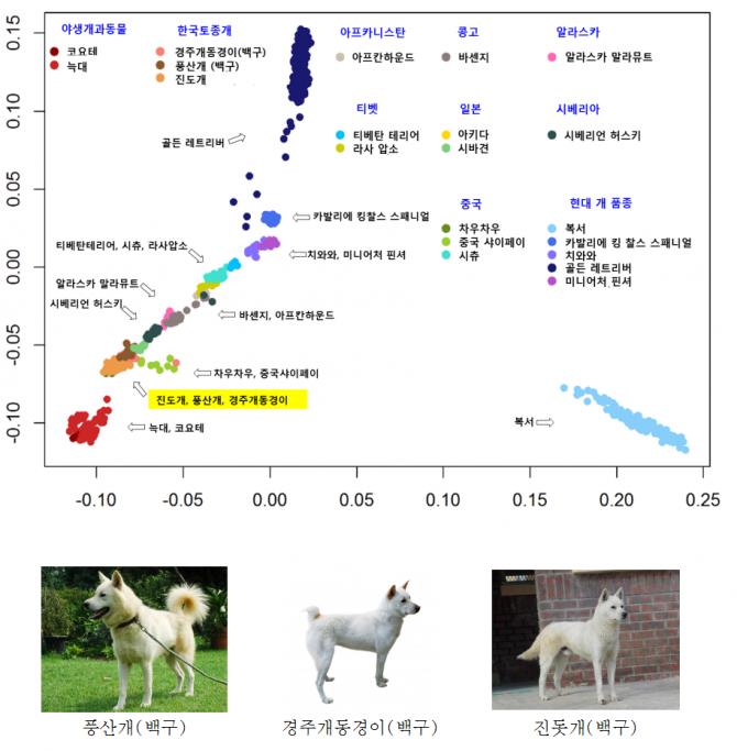 유전적으로 늑대와 한국토종개가 매우 가까우며, 그 중에서도 풍산개, 경주개, 동경이, 진돗개 순으로 더 많이 닮은 것이 확인됐다. 다른개의 비해 한국토종개가 늑대처럼 야생본능을 갖고있을 확률도 높다고 해석할 수 있다. - 농촌진흥청 제공
